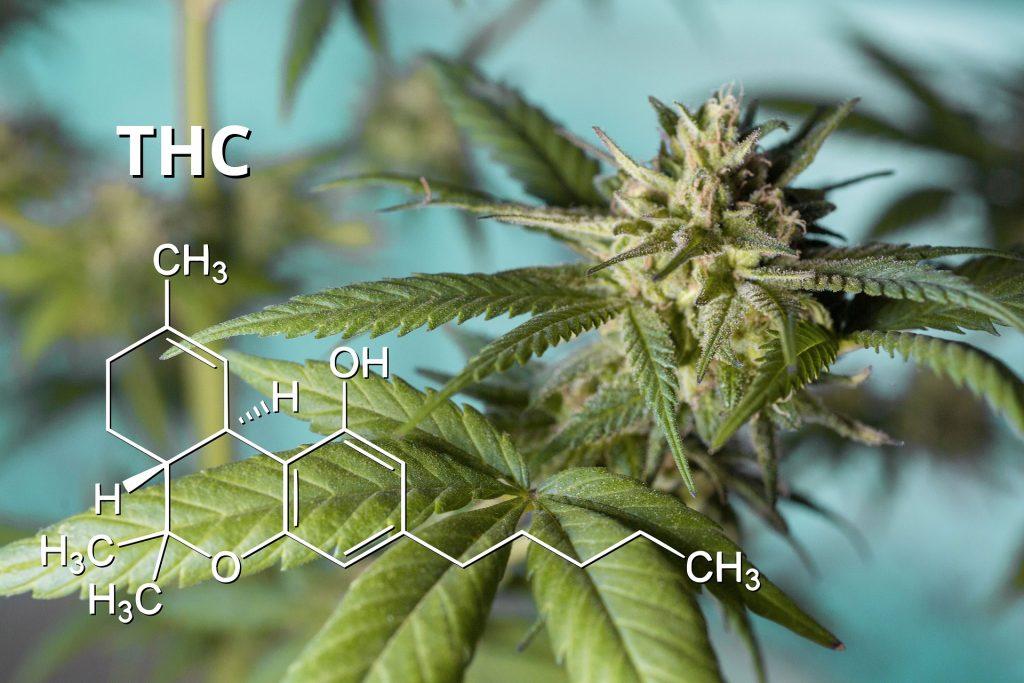THC Blüte Molekül