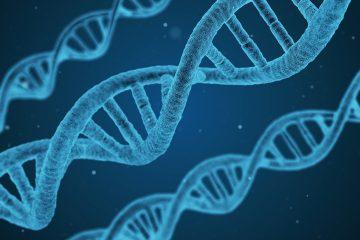 DNA Stränge